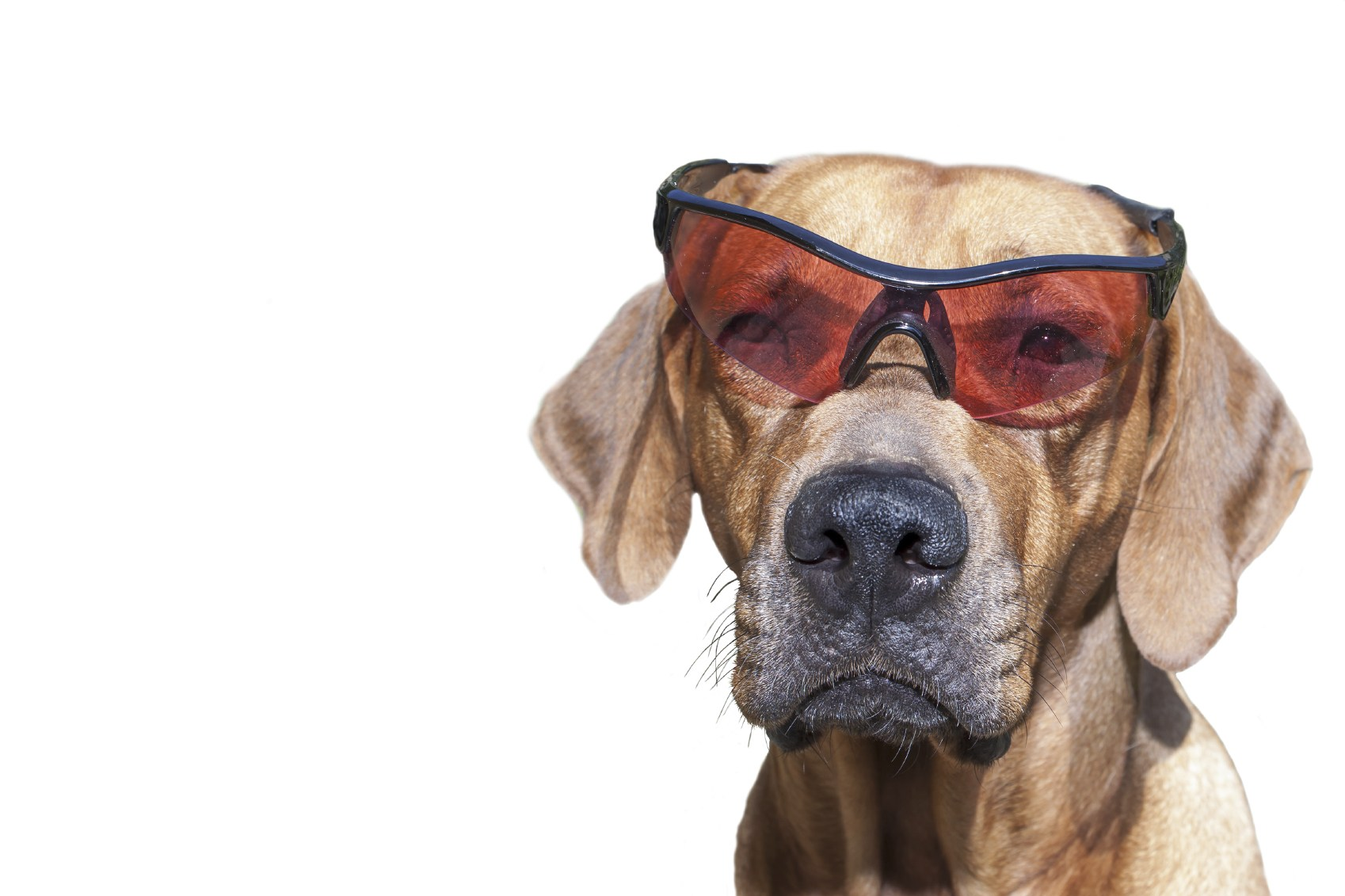 Safety glasses: For Work, Hobbies, and with your Prescription